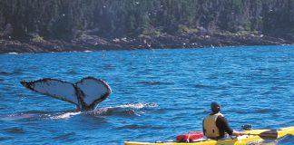 Kayaker in Witless Bay Ecological Reserve, Eastern, Newfoundland