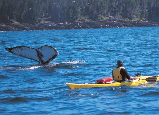 Kayaker in Witless Bay Ecological Reserve, Eastern, Newfoundland