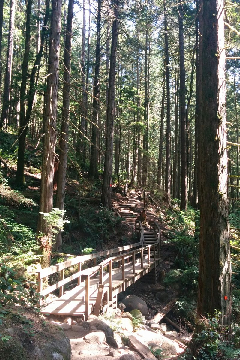 Baden Powell Trail in woods, Deep Cove, North Vancouver, British Columbia; Photo by ©Pacific Walkers