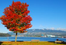 Viewing North Shore from Stanley Park in Vancouver, BC