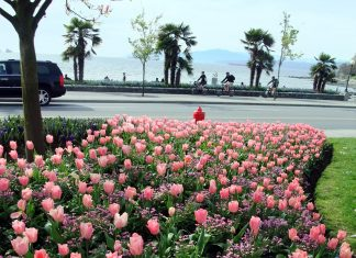 English Bay from a tulip garden, Vancouver; Photo by ©Pacific Walkers